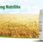 Uống Protein Amway – Nutrilite All Plant Protein Powder Liệu Có An Toàn?