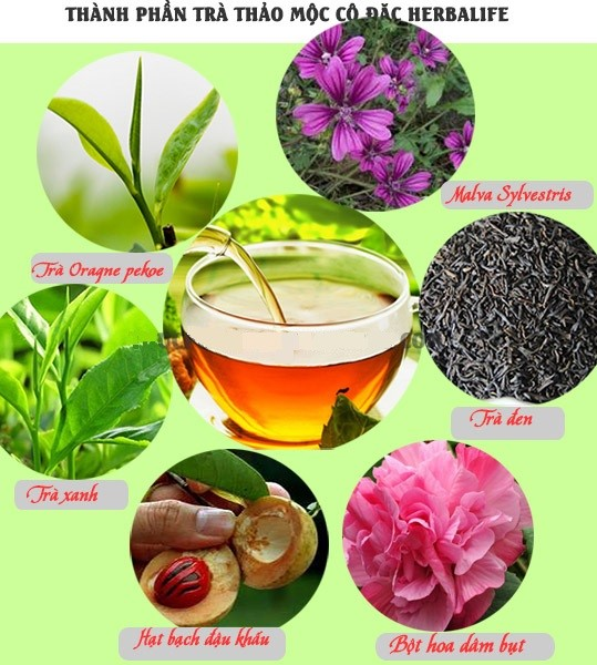 Trà Giảm Cân Herbalife Tea Concentrate Có Tốt Không? Sự Thật Như Thế Nào